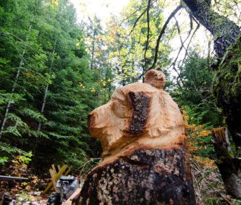 Et ce matin, une rencontre tout aussi surprenante qu'inattendue avec l'ours de la forêt !
