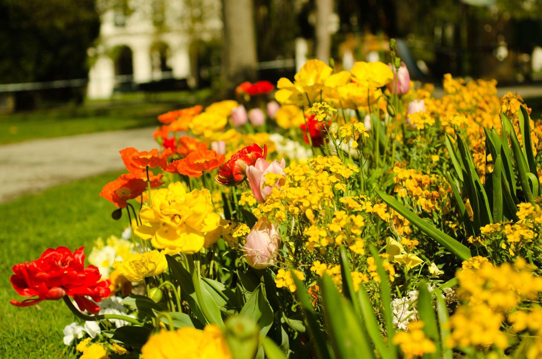 Le jardin des plantes de Grenoble, un réel enchantement pour les pupilles !