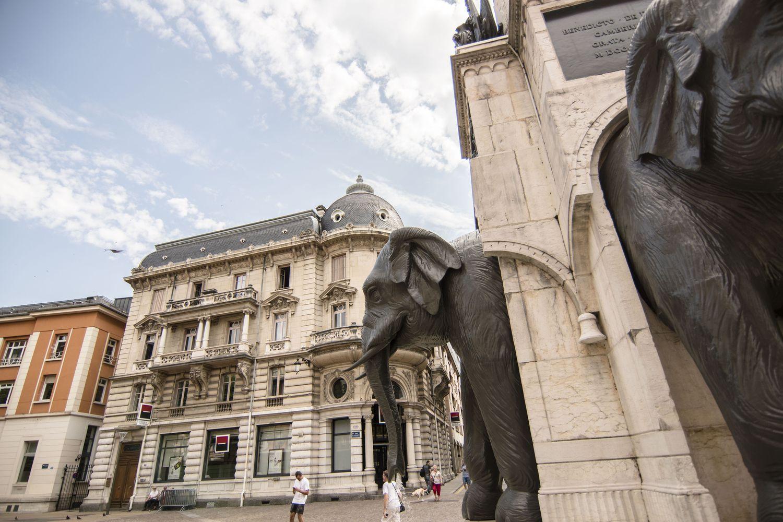 Chambéry, la ville où l'on rencontre des éléphants mais pas que…