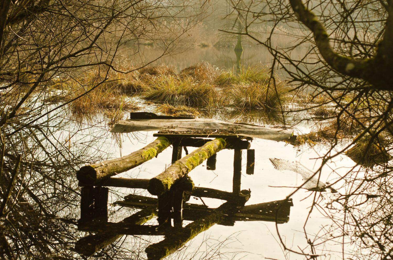 Une promenade enchanteresse à l'étang de Boulieu !