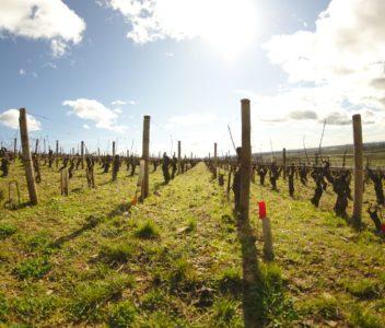 Escapade en Bourgogne – Tourisme : quelques idées d'activités